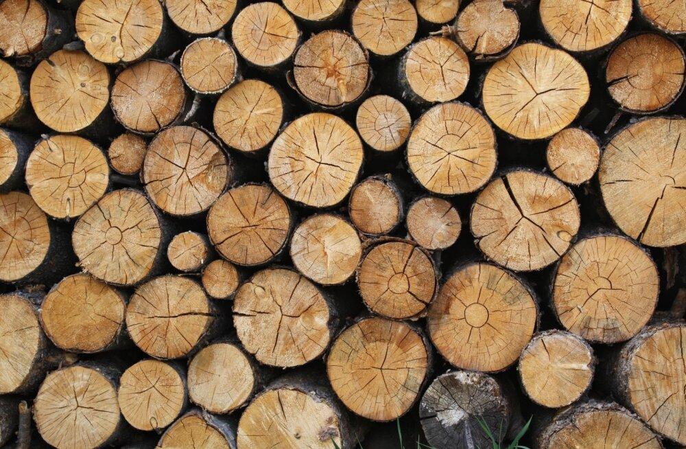 Langetatud puutüved
