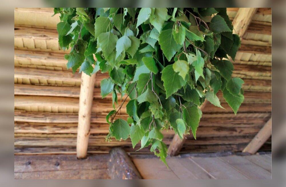Metsamoor soovitab: viis ilunippi kaselehtedega