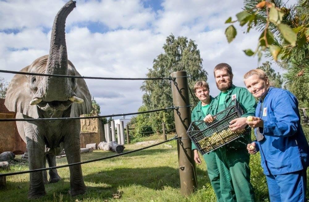 Laupäeval tähistatakse loomaaias loomaaednike päeva. Mida põnevat seal teha saab?
