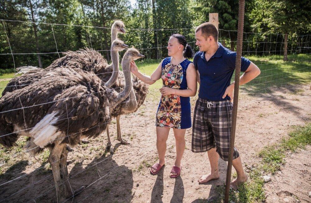 Regina ja Paul Järlov hoiatavad, et suhtlemisaldistele jaanalindudele ei tohi külastajad süüa anda.