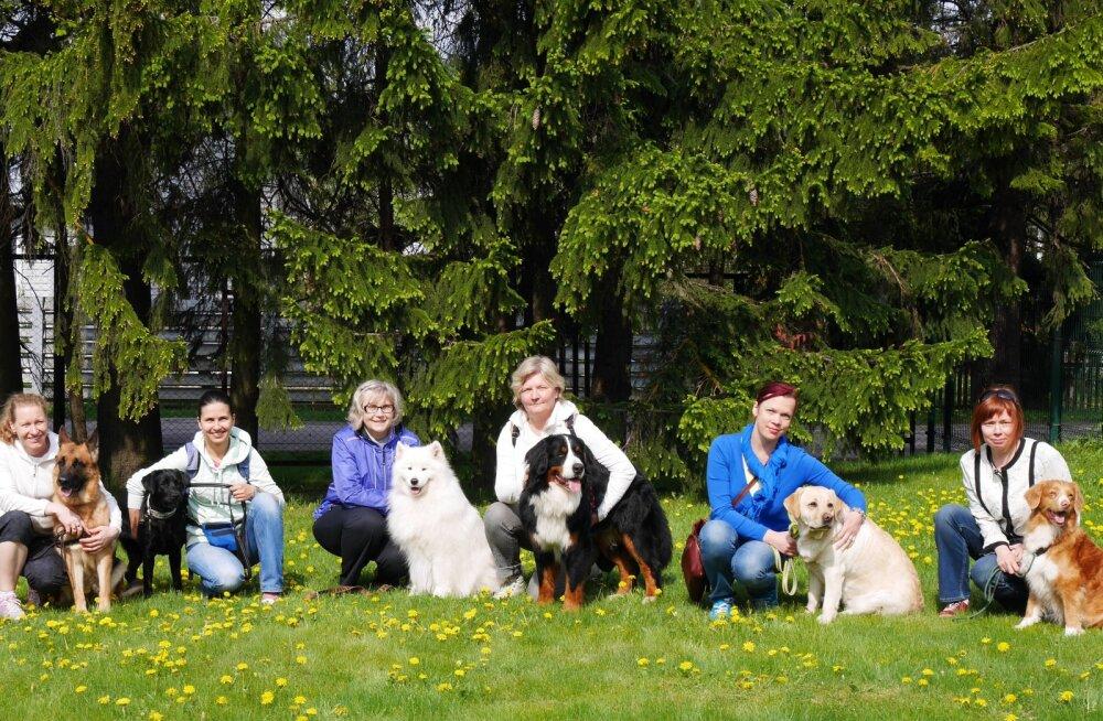 Vaata, millised koeratõud on Eestis teraapiakoertena kõige populaarsemad