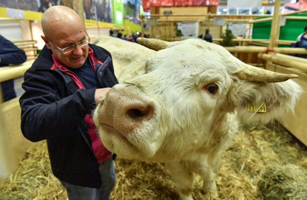 Moodne lehm kasutab sammuloendurit ning mäletsemisandurit