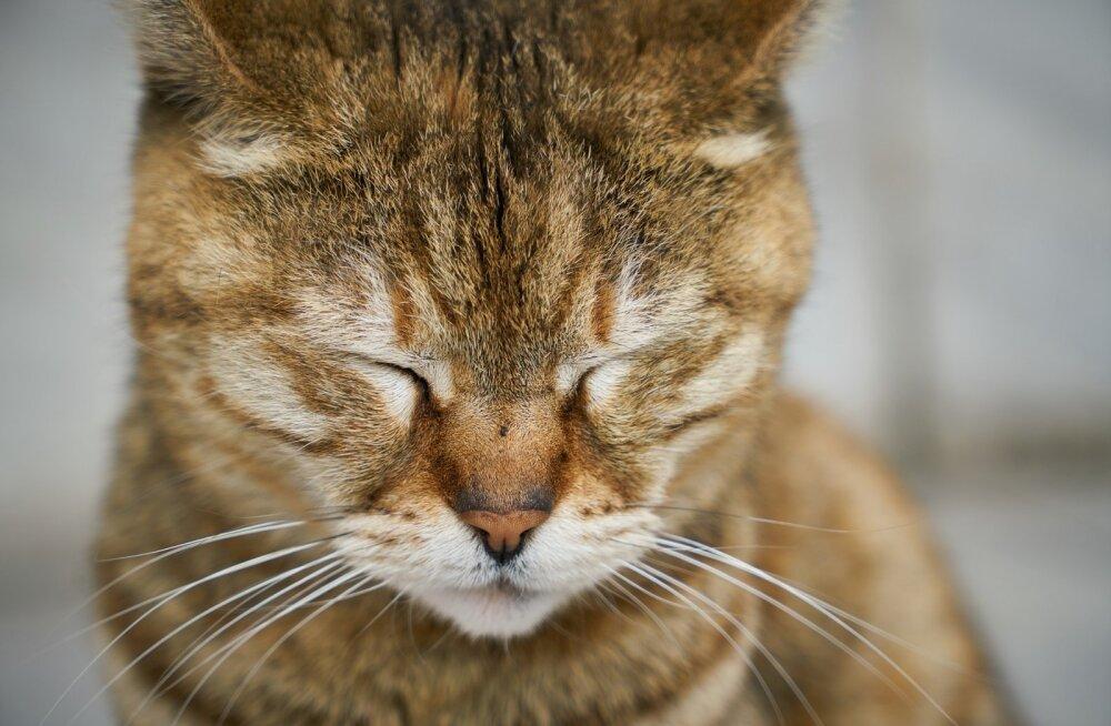 Tunded ja emotsioonid: kas kassid on suutelised kurbusest lausa nutma?