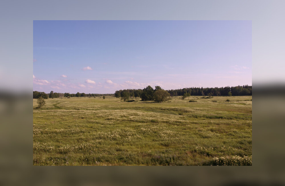 Loodusliku taimestikuga rohumaad on põllumajandusmaastiku pärlid