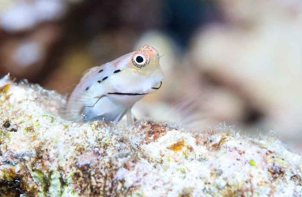 Minikalad on korallrahude elu mootor