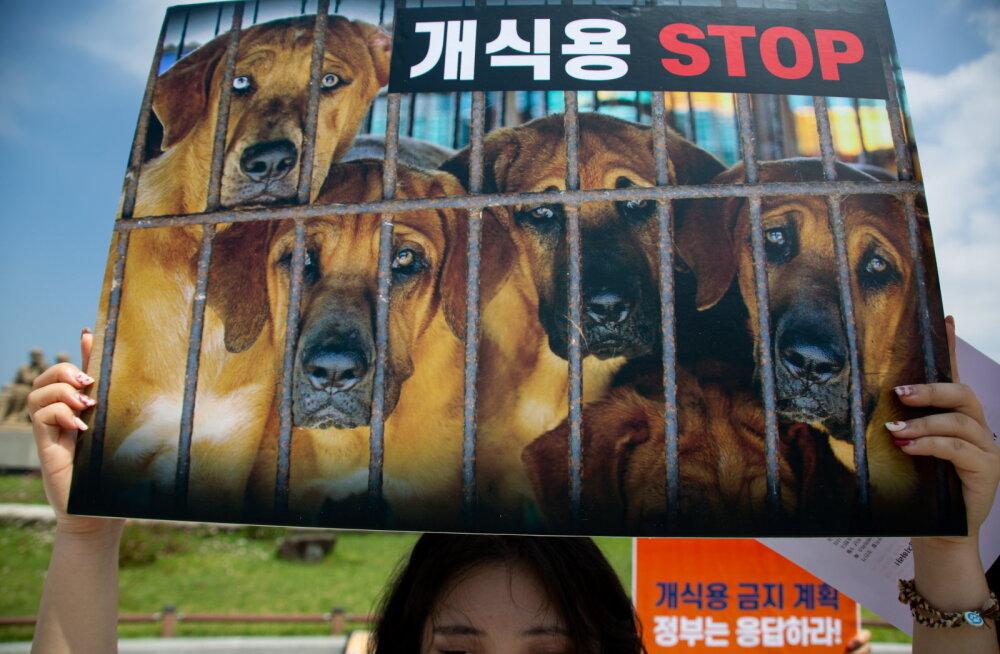 Lõuna-Korea lehe väitel konfiskeeritakse põhjakorealastelt koeri, et anda nad lihatööstusele