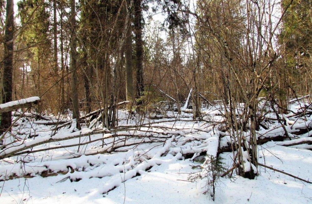 Leili metsalood | Laseks mõnel metsal metsik olla