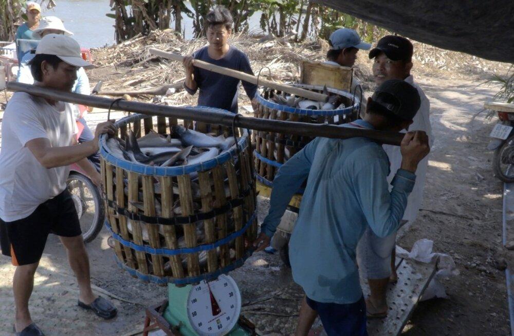 Saastatuse maine on mõjutanud sadu Mekongi delta kalakasvandusi.