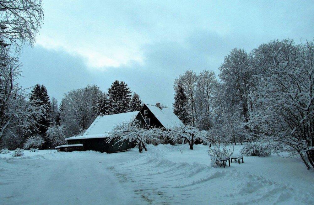 Leili metsalood | Eided lumeroopidega