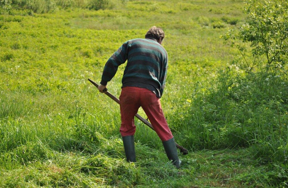Kas oled oma aiatöödes tegija?