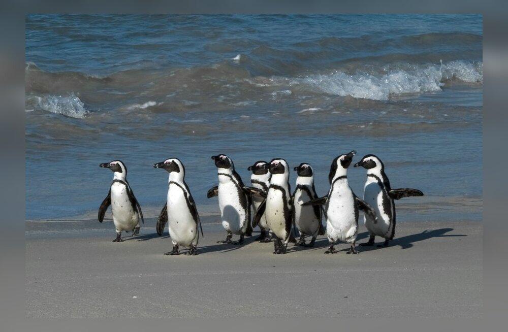 Osooniauk Antarktika kohal on tänavu väiksem