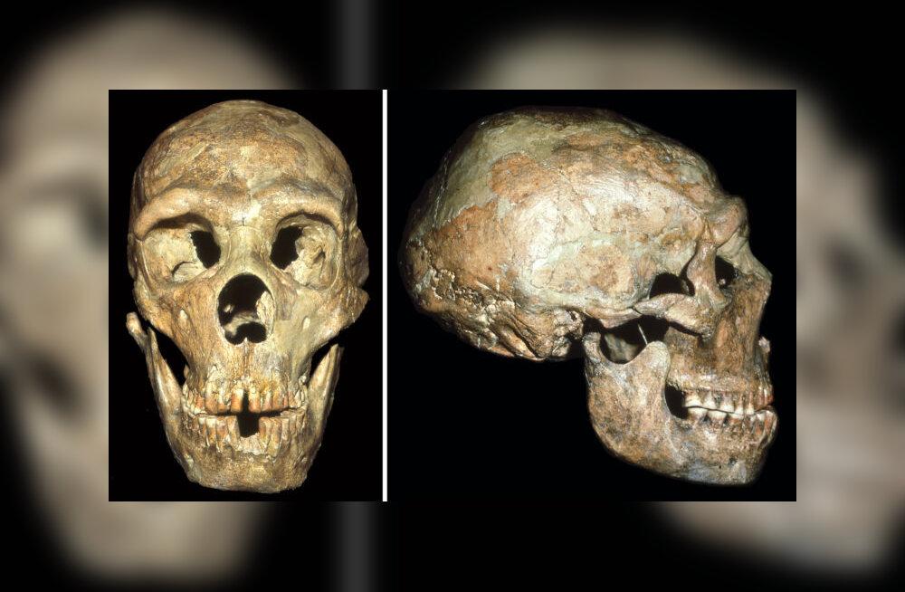Sotsiaalhoolekanne eksisteeris juba neandertallaste hulgas
