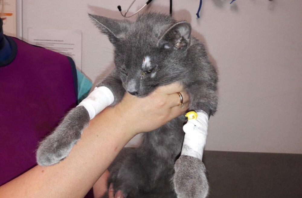 ÕPETLIK LUGU | Nädal aega Õismäel ventilatsioonišahtis lõksus olnud kassipoeg saadi ime läbi elusalt kätte