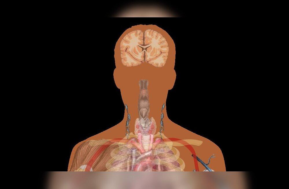 Inimkeha sisaldab tuhandeid teadusele tundmatuid rakutüüpe
