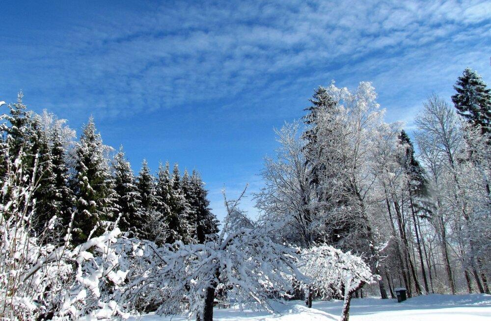 Leili metsalood | Valge lumi ja sinine taevas