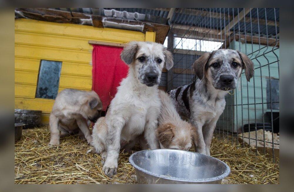 В интернете активно действуют мошенники, собирающие деньги на лечение животных