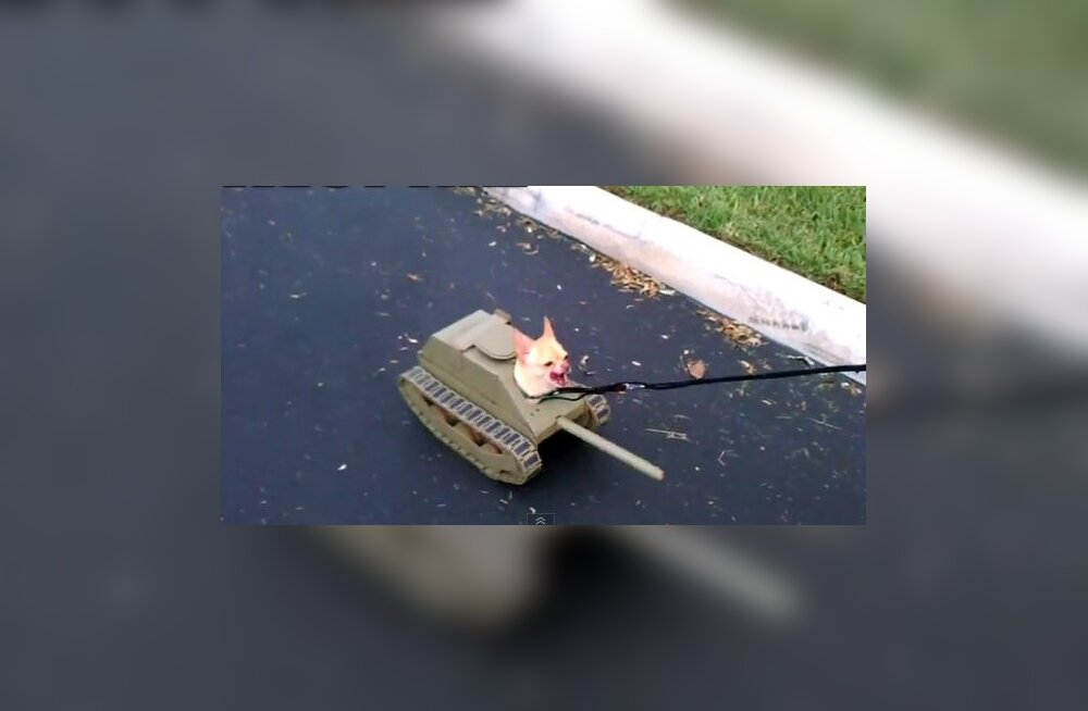 Kutsuke-tank haukumas.