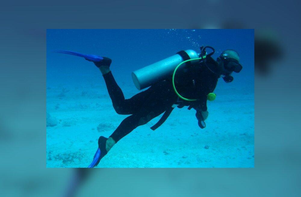 Sukeldujad sattusid 52 000 aastat tagasi uppunud merealusesse metsatukka