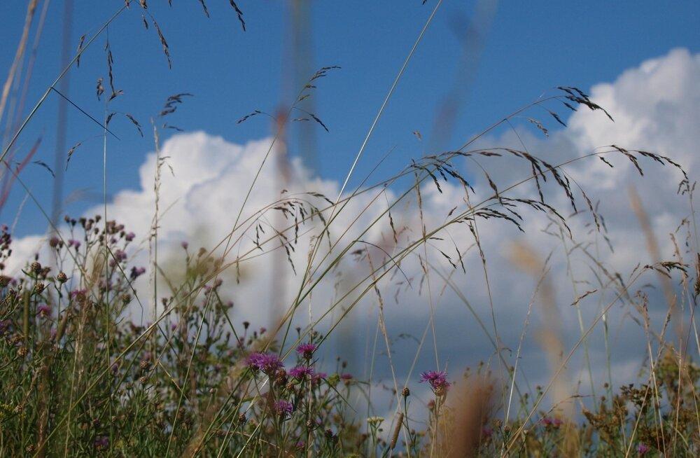 Uuel nädalal peaks loodus soojatoru uuesti avama