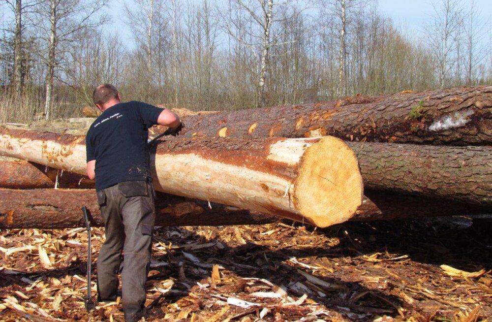 Männipuu elab palkseinas edasi