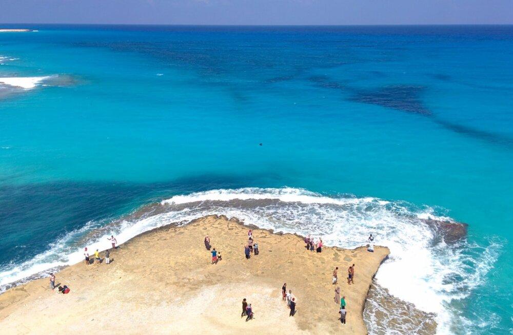 Трагедия на курорте в Египте: туристы нашли на берегу Красного моря 11 мертвых дельфинов