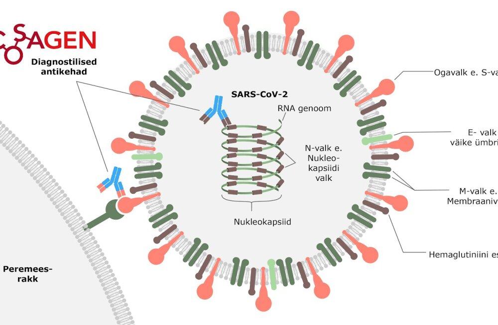 SARS-CoV-2 virion ja selle komponendid.