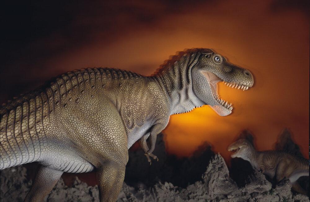 Õudusfilmimaterjali: türannosauruse hammustus purustaks auto