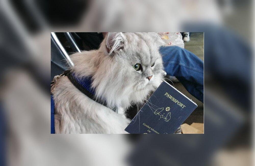 Maailmarändurist kass üllatab vaatajaid värvikate ja eksootiliste reisipiltidega