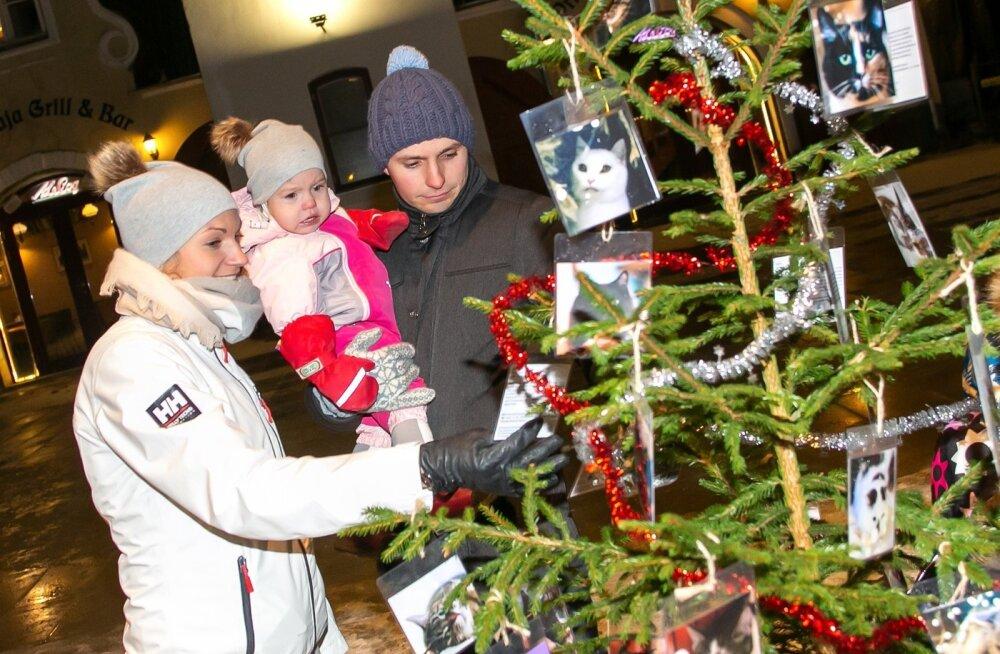 ФОТО: К Рождеству готовы! Главные елки в разных городах Эстонии