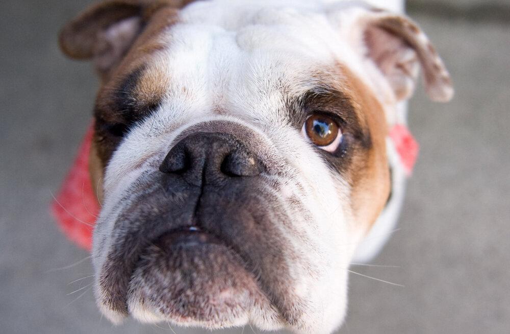 Kuidas märgata ja leevendada koera stressi?
