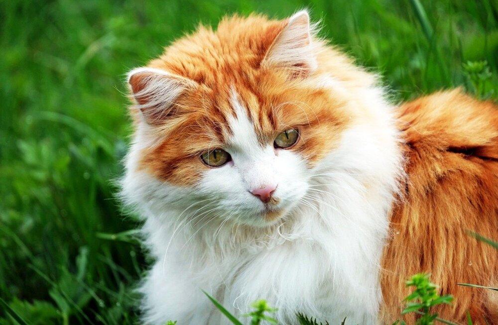 Millisel viisil annab kass märku, et sa talle meeldid?