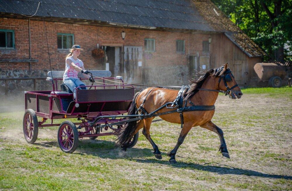 Tori hobusekasvanduses saab peale ratsutamise ka kaarikuga sõitu teha.