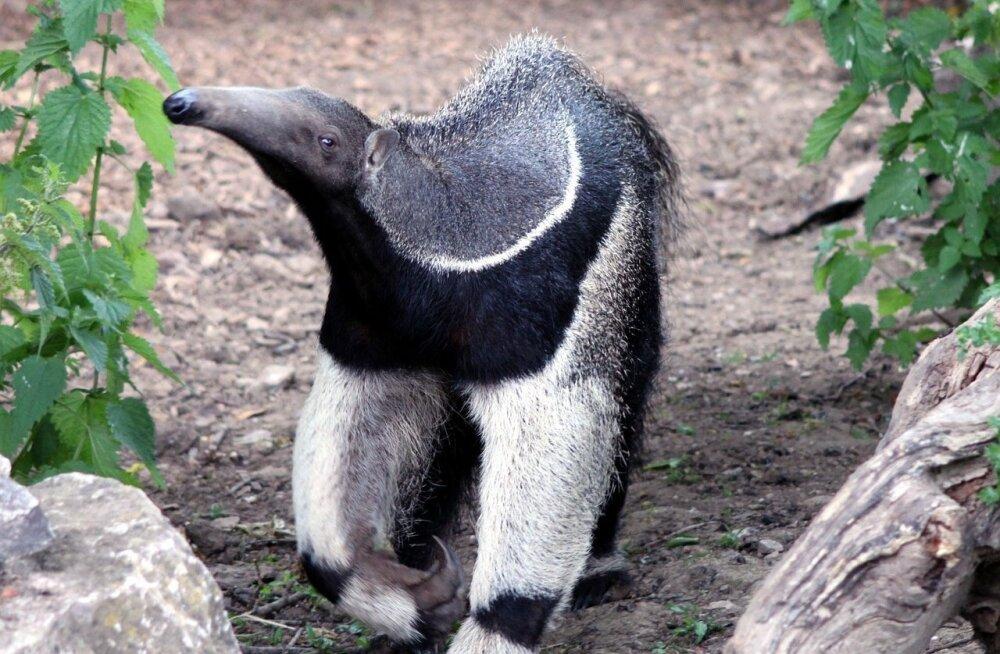 TOP 10 | Pealtnäha nunnud loomad, kes on tegelikult surmavalt ohtlikud
