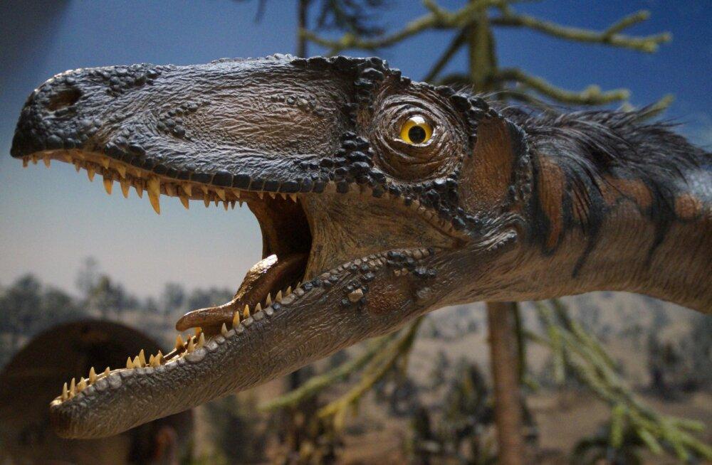 Väga haruldane leid: teadlased avastasid uue lihasööja dinosauruseliigi