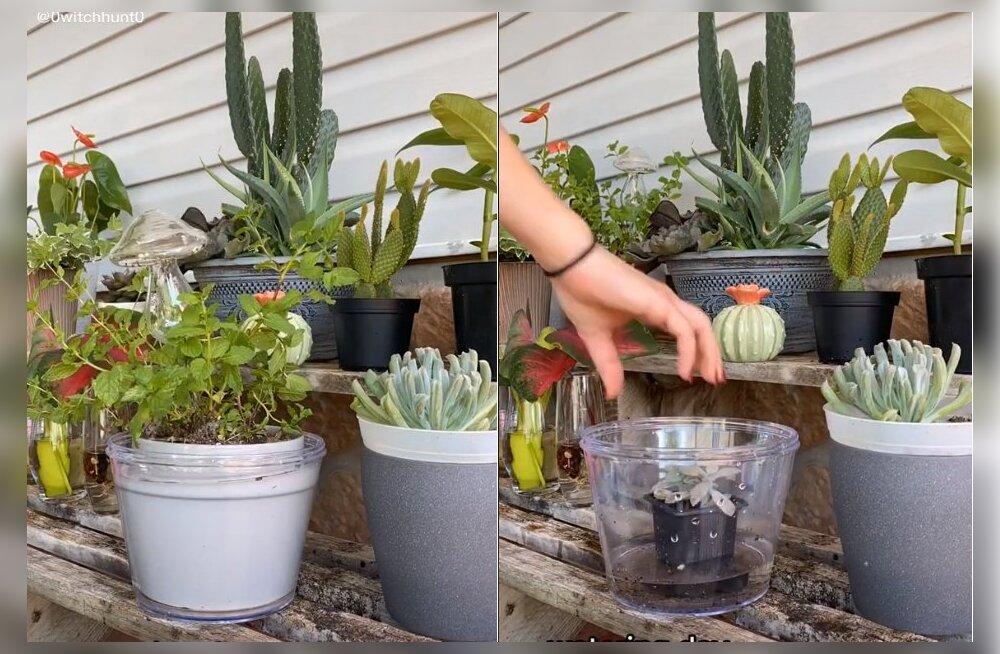 VIDEO | Lillede kastmine ei ole kunagi nii lihtne olnud! Seda meetodit kasutades ei saa enam potist mööda valada