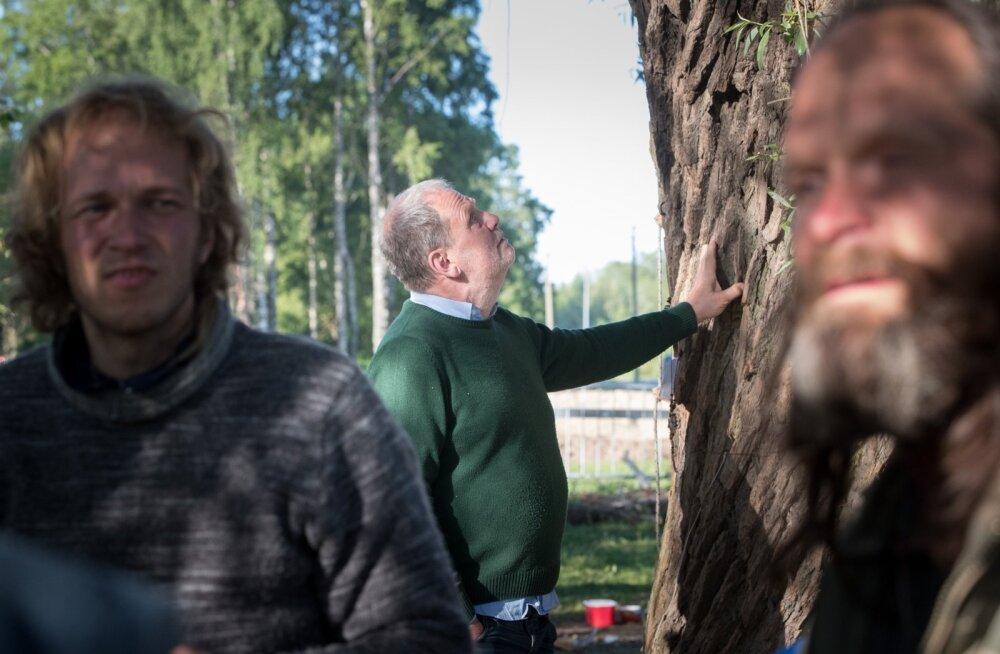 Puukaitsjad Haabersti ringi juures