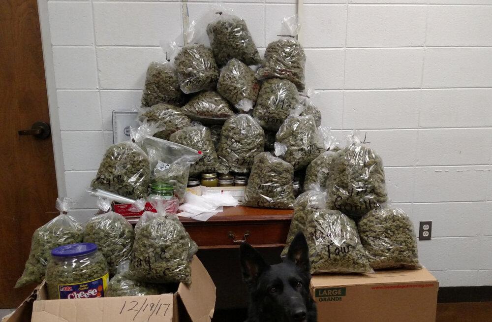 Endise UFC võitleja autost leiti 55 kg marihuaanat ja hunnik sularaha