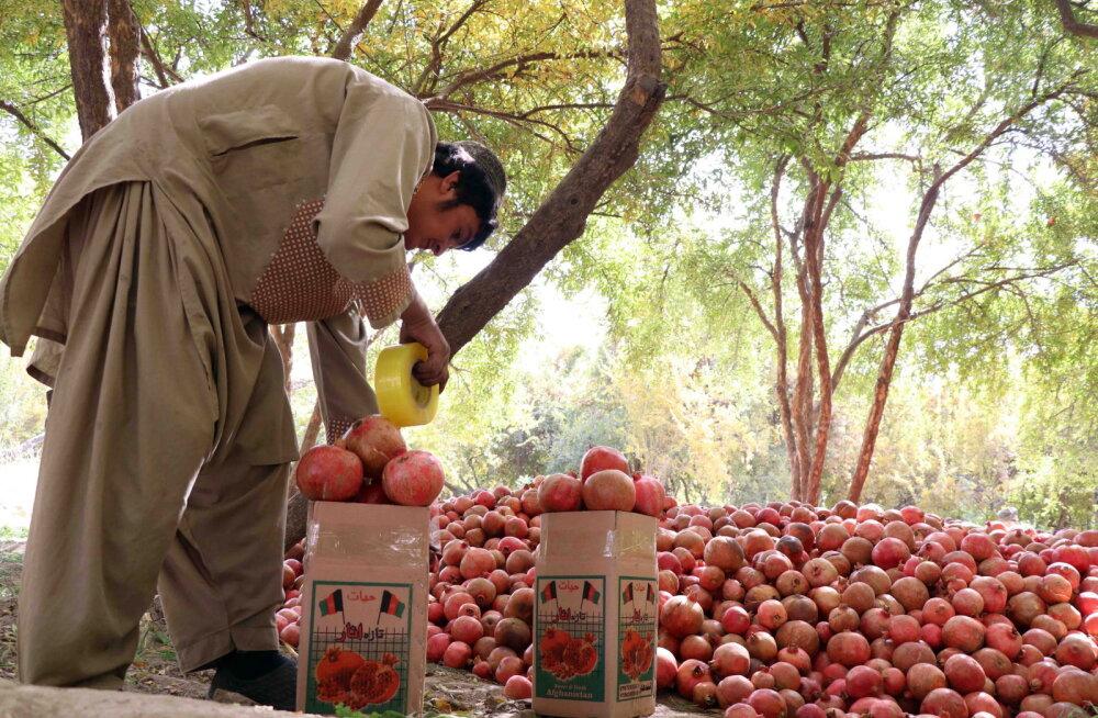 ФОТО | Как в Афганистане гранаты собирают