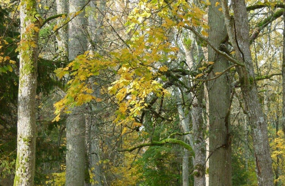 Ainuüksi fotod puudest võivad enesetunnet parandada.