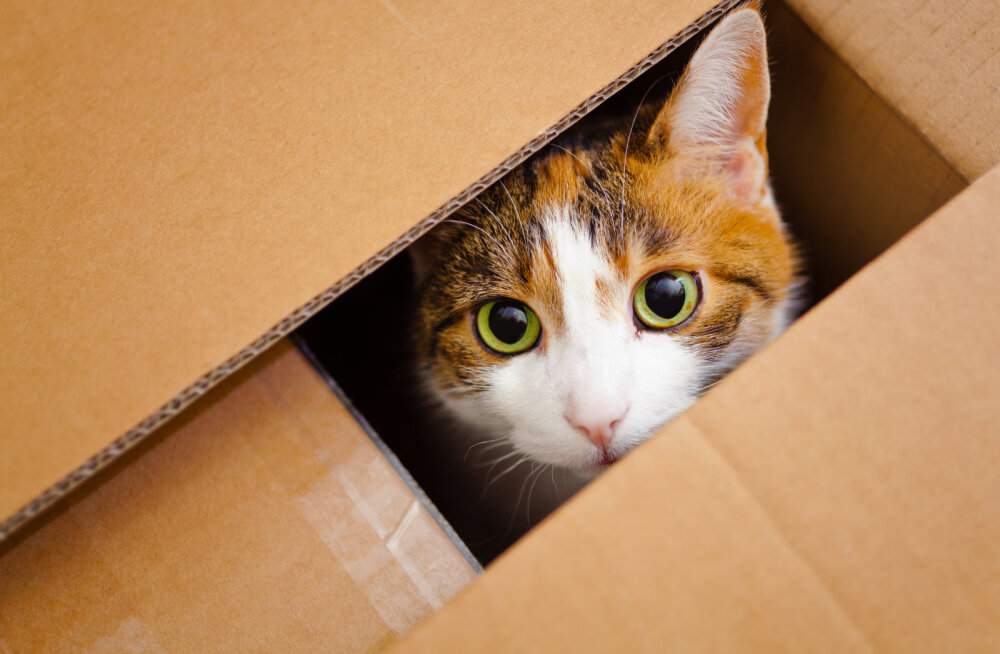 Miks meeldib kassidele pappkasti peitu pugeda?