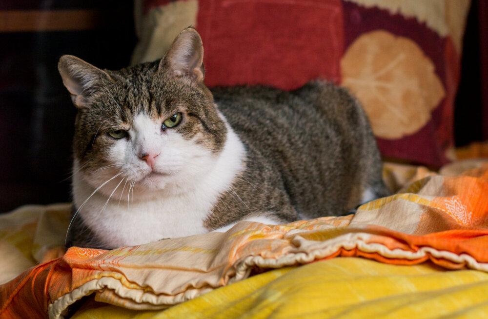 Käpsi abipalvet võeti kuulda: kass sai elule uue võimaluse