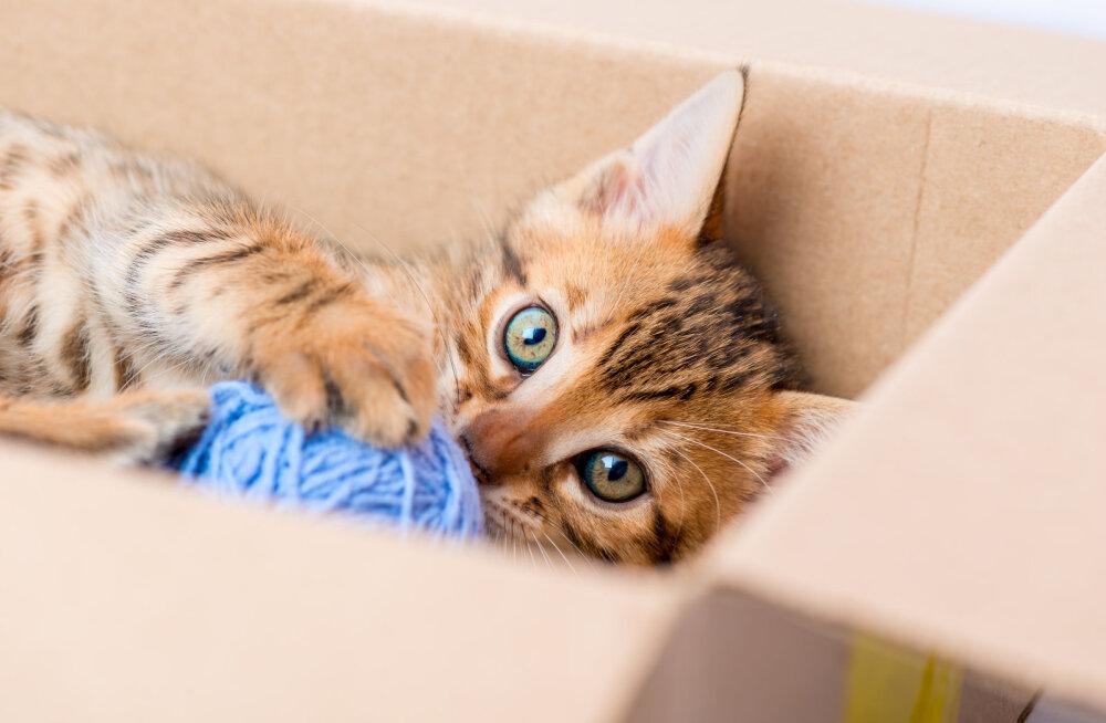 Miks kassid kitsaid kohti armastavad?