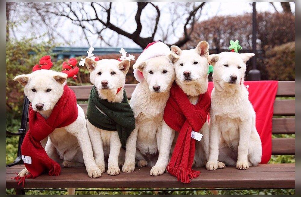 Tagandatud president Park jättis lõunakorealaste suureks pahameeleks oma koerad presidendipaleesse maha