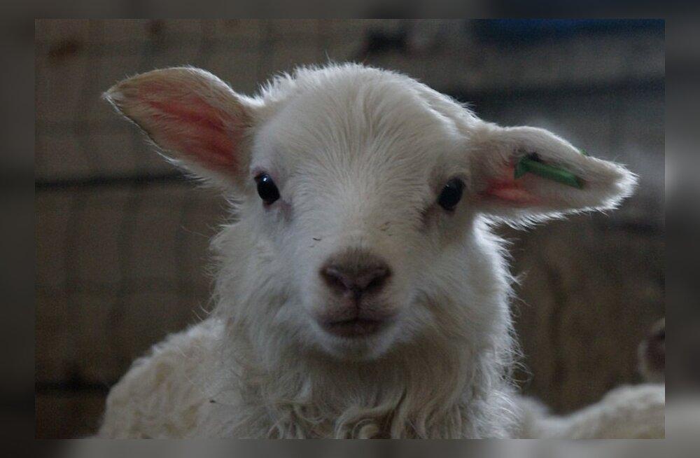 Lugeja: lamba-aasta toogu lahendused vinduvatele draamadele!