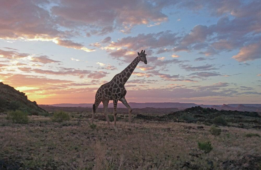 Путешествие по ЮАР: Не совсем Африка