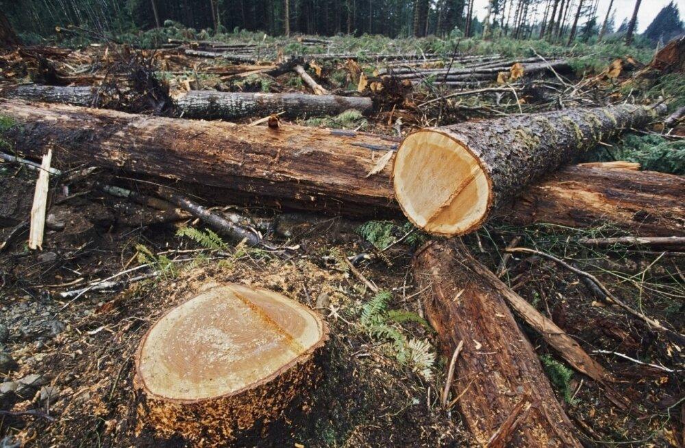 """Tule osale ühismeeleavaldusel """"Päästame Eesti metsad!"""""""