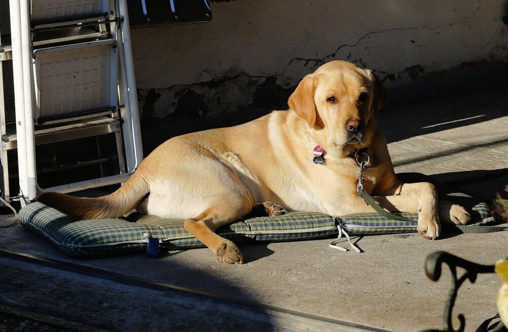 Südamlik lugu: poiss, kes tahtis väga lemmiklooma, hiilis iga päev salaja naabrite garaaži koera kallistama