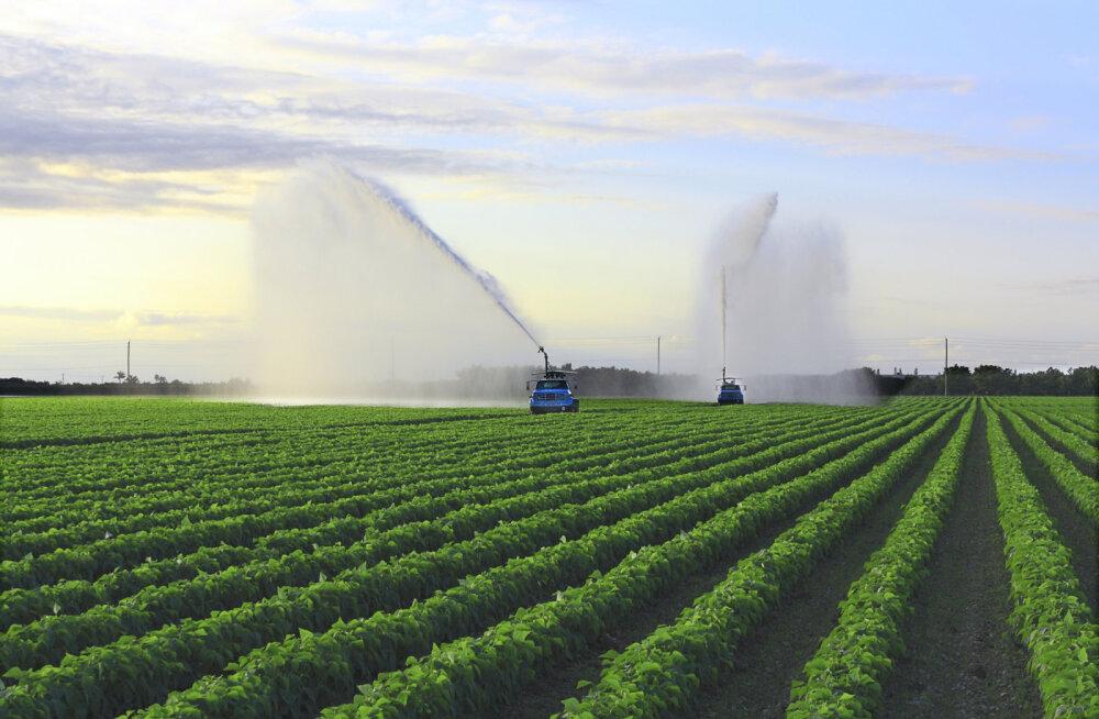 Rohelised: vähki tekitava taimemürgi kasutamisluba tahetakse pikendada veel 15 aastaks