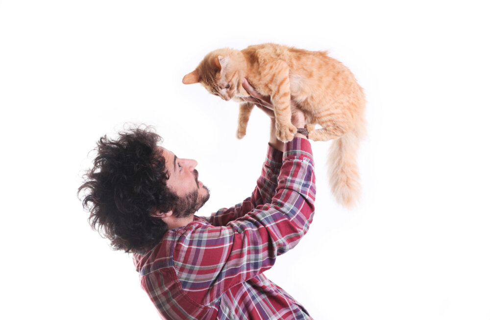 Kuidas kassi tervitada? Õiged ja valed viisid kassile lähenemiseks