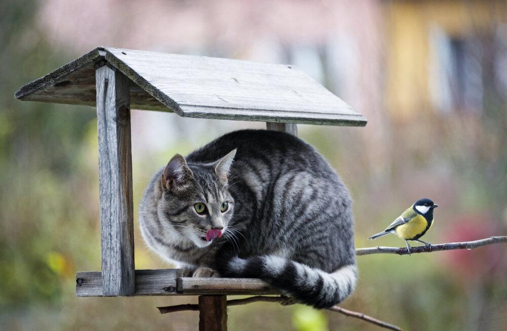 USKUMATU | Mida võib üks kass korda saata